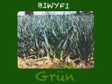 Biwyfi: Grün – oder – Vom Porreefeld zumLauchkuchen