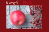 """Fruits of autumn: Apfel – oder –  Mamas Apfelkuchen a là"""" das merkst du dann schon"""" – oder – Biwyfi:Rot"""