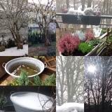 Beauty is where you find it: Wintercollage-Januar – oder – Der Winter, der sich als Frühling verkleidethat