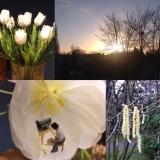Biwyfi: Februar-Collage – oder – Alles so schön bunthier