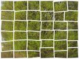 Biwyfi: Grün – oder – GrüneVorfreude