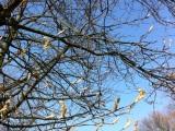 12 von 12 im März – oder – Frühling lässt sein blauesBand