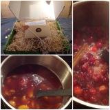 Das Geheimnis wird gelüftet: Post aus meiner Küche # 1 – oder -🎄 X-Mas-Konfitüre und Cranberry-Marmelade
