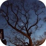 Mein Photo der Woche #36 – oder – Baumkrone, Kunstwerk derNatur