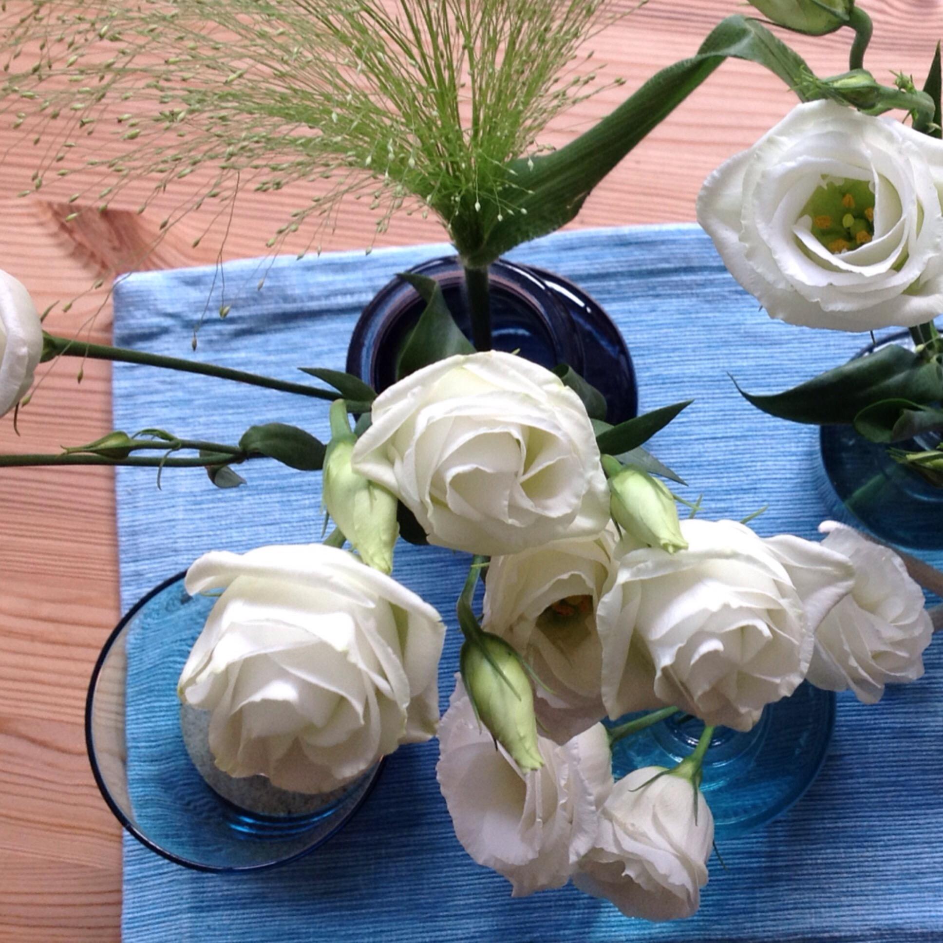 Ich mag es blau und weiß – oder – Friday-Flowerday