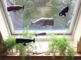 Save the Whales – oder – Mein Walfischbecken amKüchenfenster