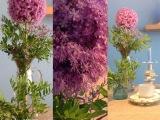 Die lila Versuchung – oder – Freitag-Flowerday