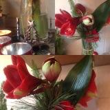 Friday-Flowerday am Samstag – oder – Amaryllis, dieZweite
