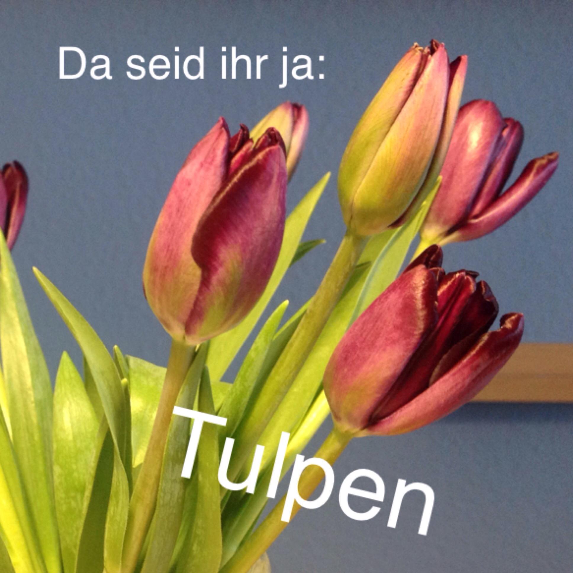 Friday-Flowerday – oder – Da seid ihr ja: Tulpen
