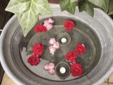 Warum es hier so lange still war – oder – Rote Rosen am Friday/Flowerday