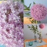 Friday-Flowerday – oder – Allium und Eukalyptus,maritim