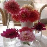 Friday-Flowerday – oder – Vom Garten auf denTisch