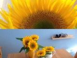 Friday-Flowerday – oder – Die Zeit für Sonnenblumen istda