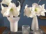 Friday-Flowerday – oder – Noch einmalAmaryllis