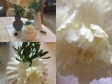 Friday-Flowerday – oder – Rosen, Tulpen,NELKEN…