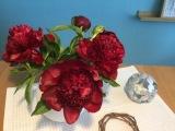 Friday- Flowerday – oder – Pfingstrosen-Liebe