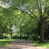 12tel- Blick im Mai 2017 – oder –Friedhofsruhe