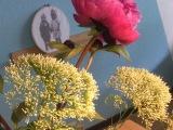 Friday-Flowerday – oder – Bestimmt die letztenPfingstrosen