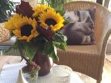 Friday-Flowerday – oder – Zeit fürSonnenblumen