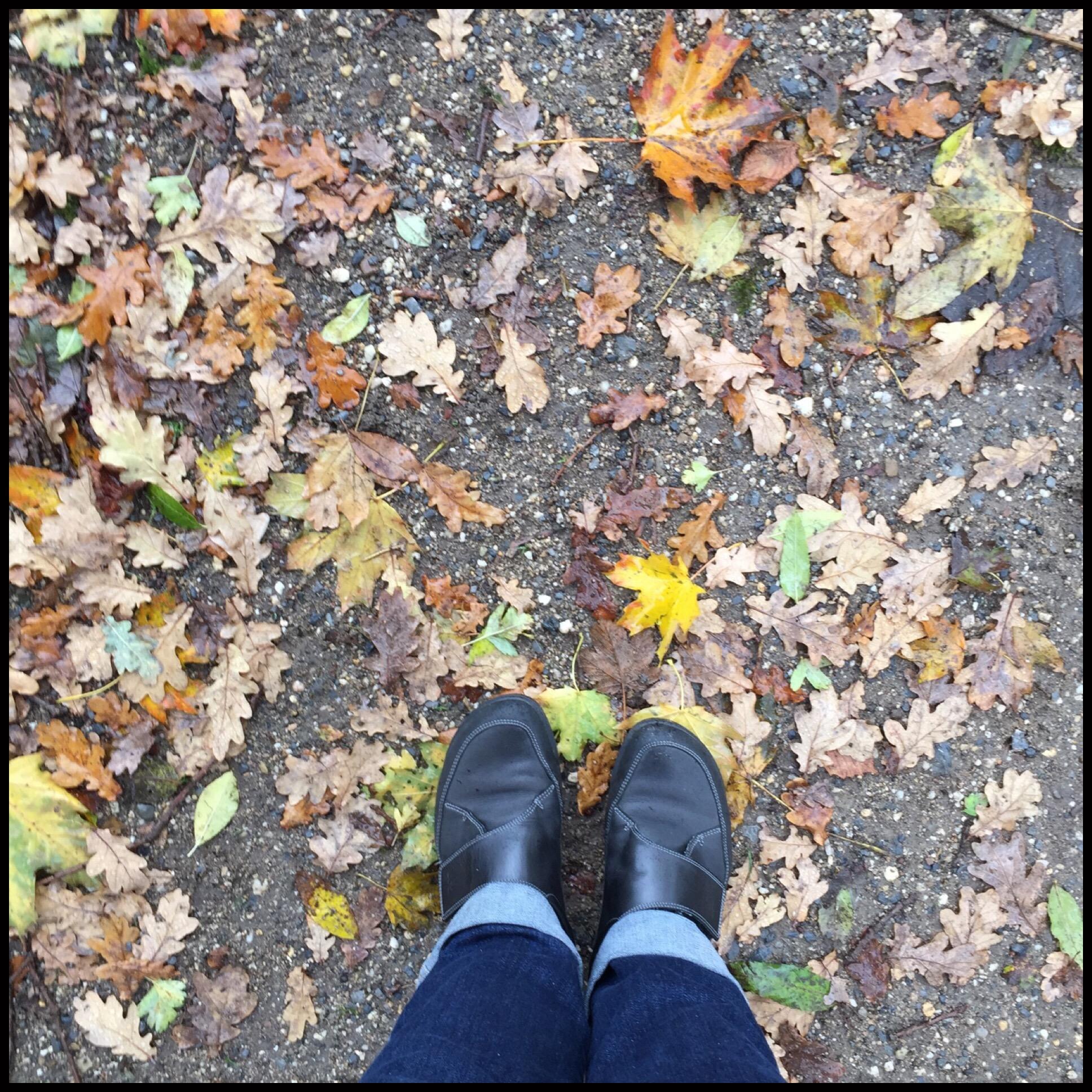 12 von 12 im November 2017 – oder – Von Geschenken und einem Sparziergang im Regen