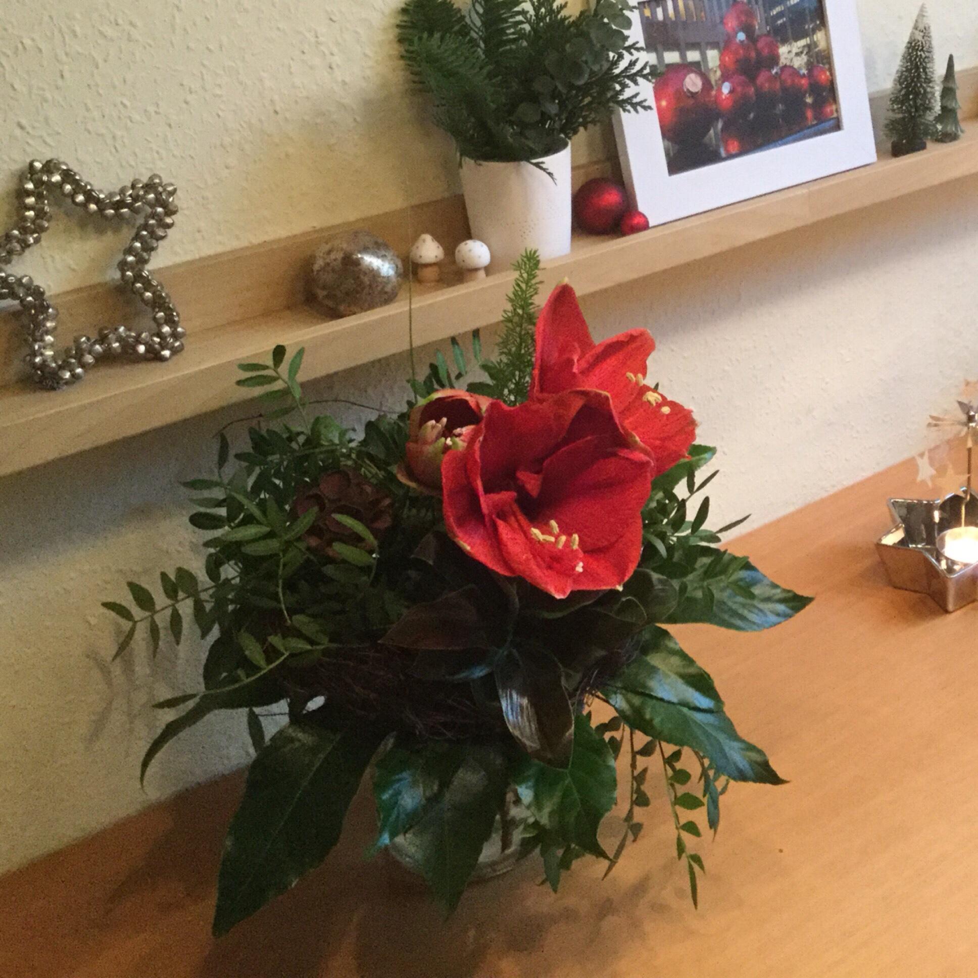 Friday-Flowerday – oder – Auch schön in rot: Amaryllis III