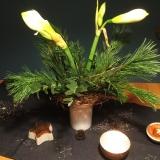 Von Weihnachtssternen aus Papier und echten Amaryllis – oder – Meine Blume des Monats: Amaryllis von prunkvoll bisschlicht