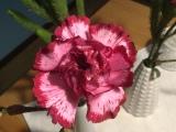 Friday-Flowerday – oder – OhneWorte