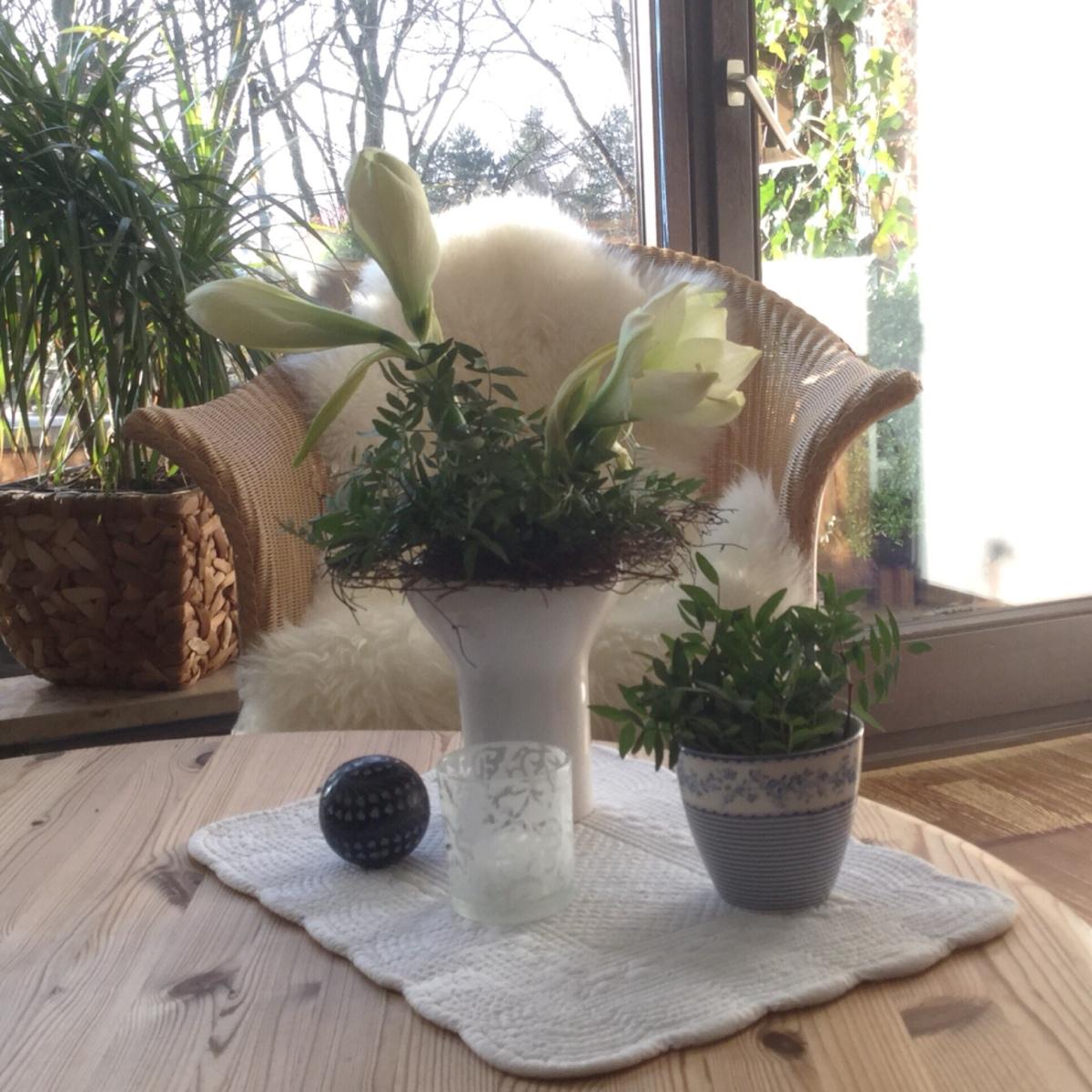 Friday-Flowerday - oder - Winterweiße Amaryllis