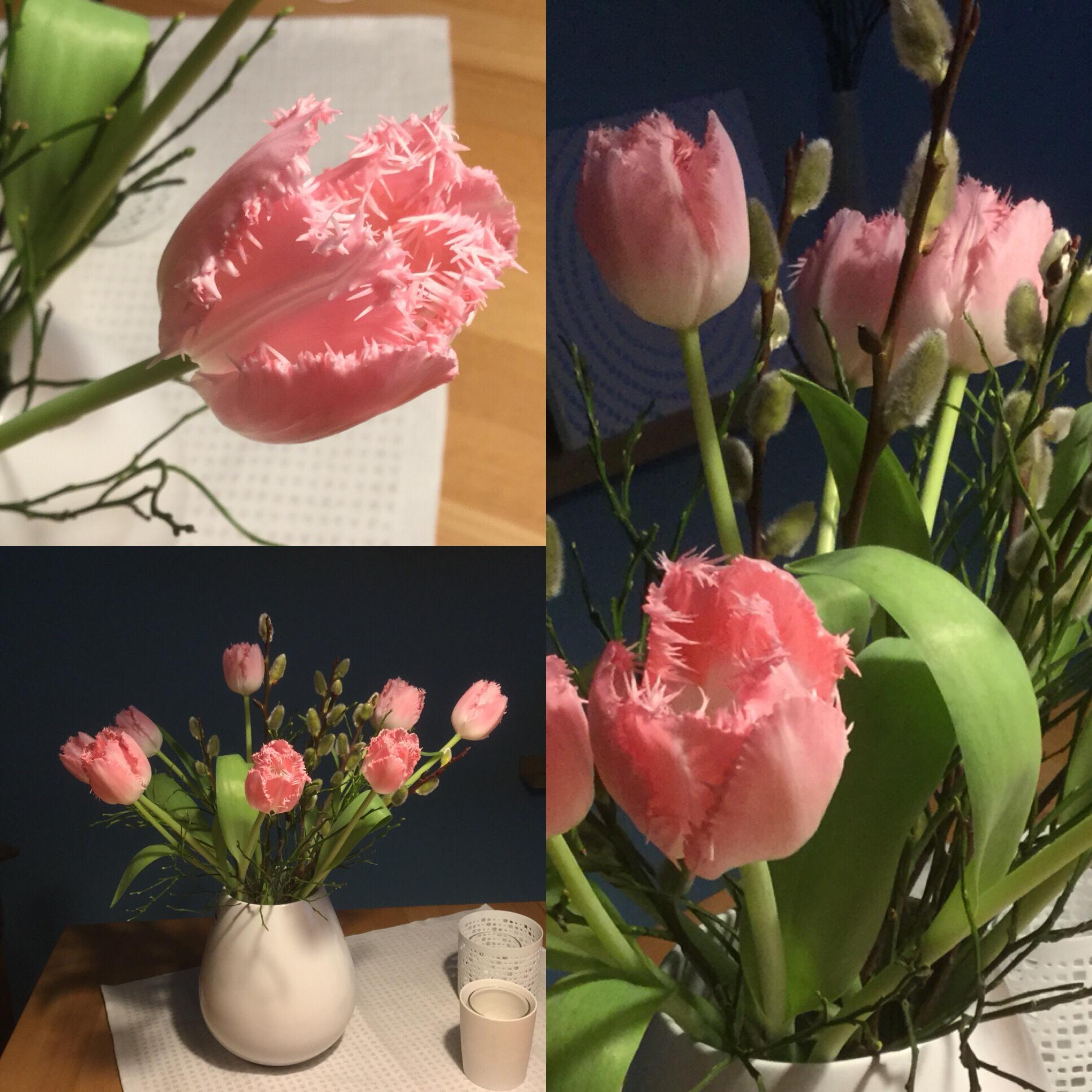 Friday-Flowerday – oder – Von (Papageien)-Tulpen und Weiden-(Kätzchen)