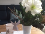 Friday-Flowerday – oder – Die Amaryllis und derEngel