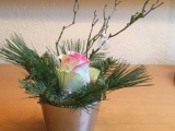 Friday-Flowerday – oder – Eine weihnachtlicheRose