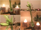 Saturday-Flowerday – oder – Amaryllis undEngelsflügel