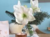 Friday- Flowerday – oder – Ja, ist denn nochWeihnachten?