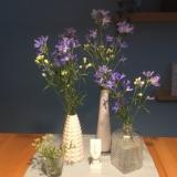 Friday-Flowerday – oder – Zart undlavendelblau