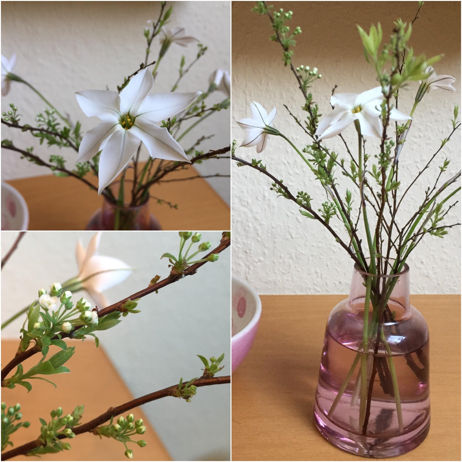 Friday-Flowerday – oder – Vom Balkon auf den Tisch