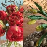 Friday-Floweday – oder –  So verschieden können Tulpenaussehen