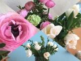 Kleine Osternachlese – oder – Von Tulpen undRanunkeln