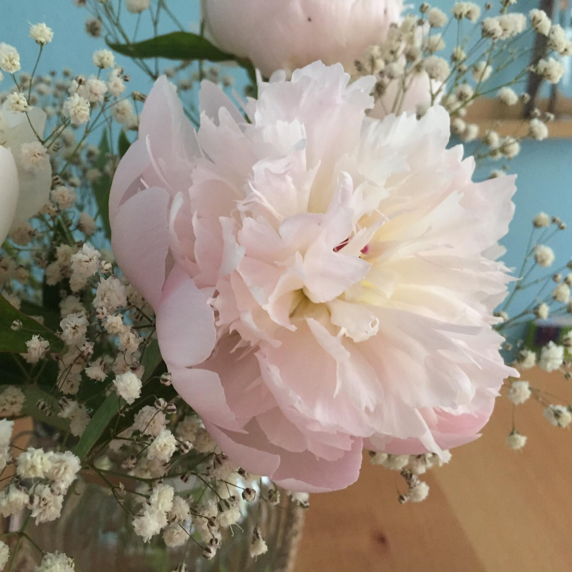 Friday-Flowerday – oder – Pfingstrosen zum 1. Mai