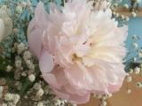 Friday-Flowerday – oder – Pfingstrosen zum 1.Mai
