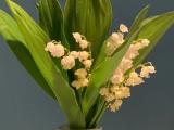 Friday-Flowerday – oder – Just in time:Maiglöckchen
