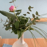Friday-Flowerday – oder – Pfingstrose als Solistin