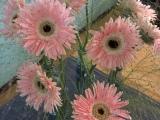 Friday-Flowerday – oder – Ein Blumenstrauß in sechsVasen