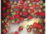 12 von 12 im Juli 2019 – oder – Von Erdbeeren, einer Kühlschrankputz-Session und Rotkohl imSommer