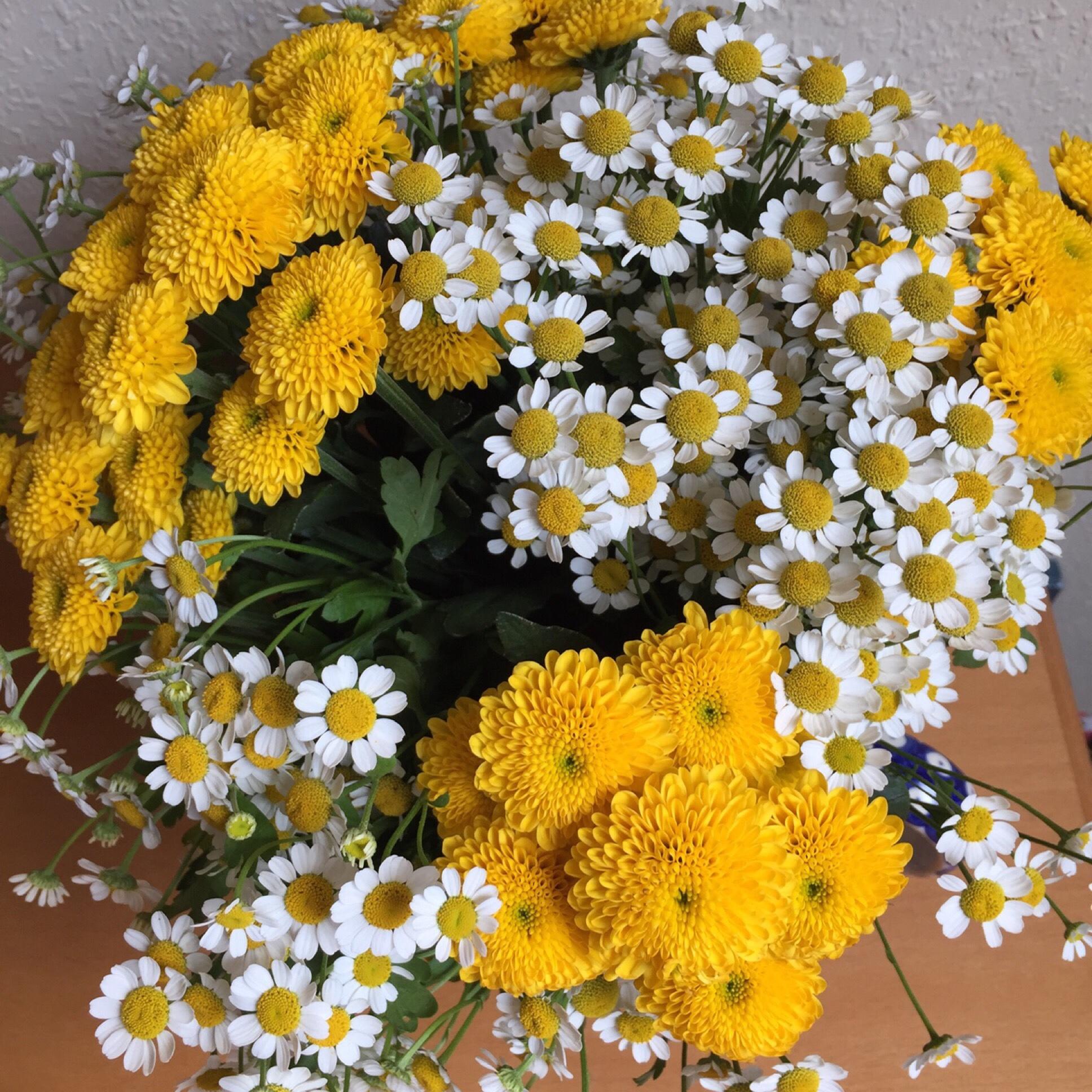 Friday -Flowerday – oder – Wie vom Wegesrand
