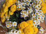 Friday -Flowerday – oder – Wie vomWegesrand