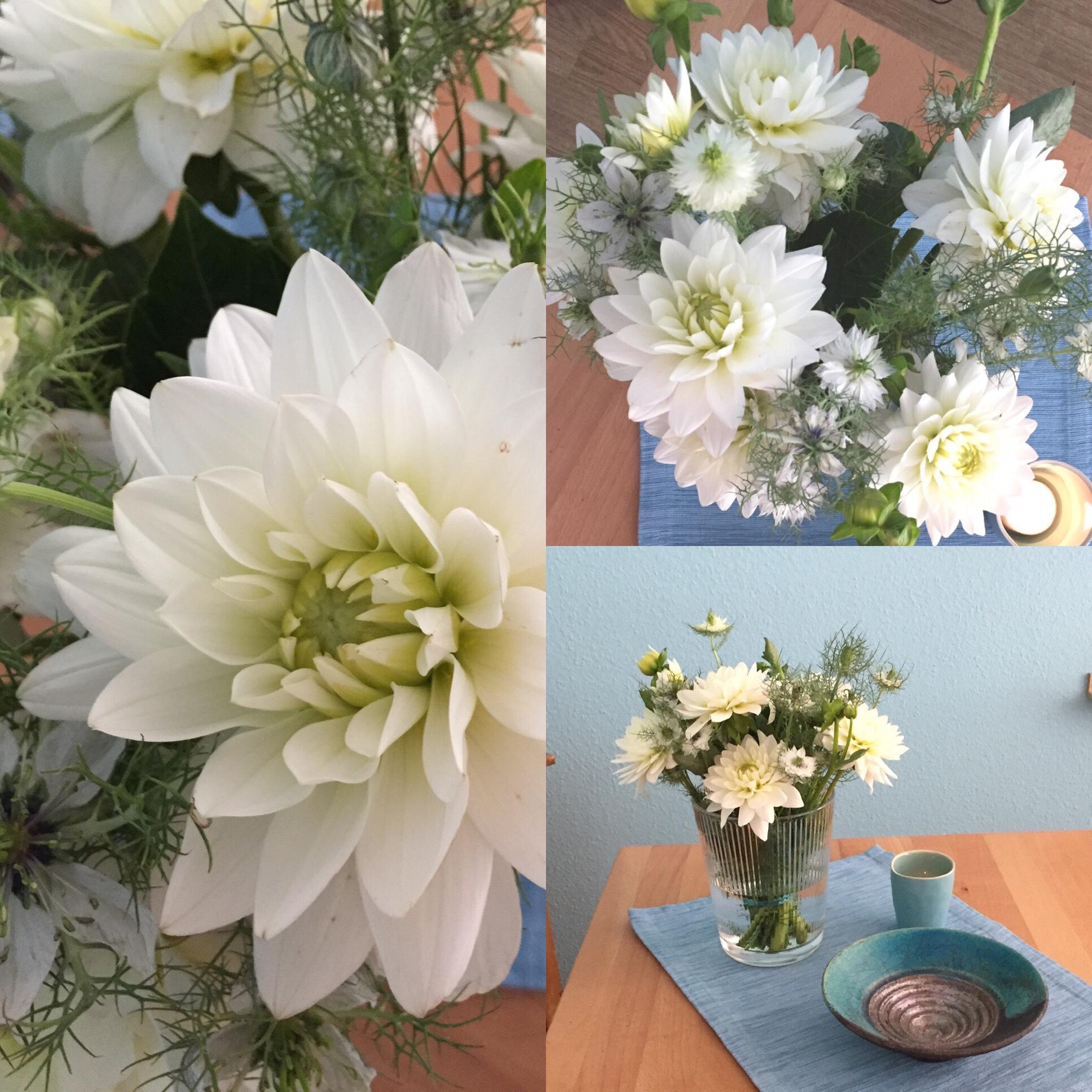 Friday-Flowerday – oder – Kompakt und zart: Dahlien und Jungfer im Grünen