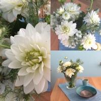Friday-Flowerday - oder - Kompakt und zart: Dahlien und Jungfer im Grünen