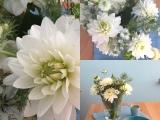 Friday-Flowerday – oder – Kompakt und zart: Dahlien und Jungfer imGrünen