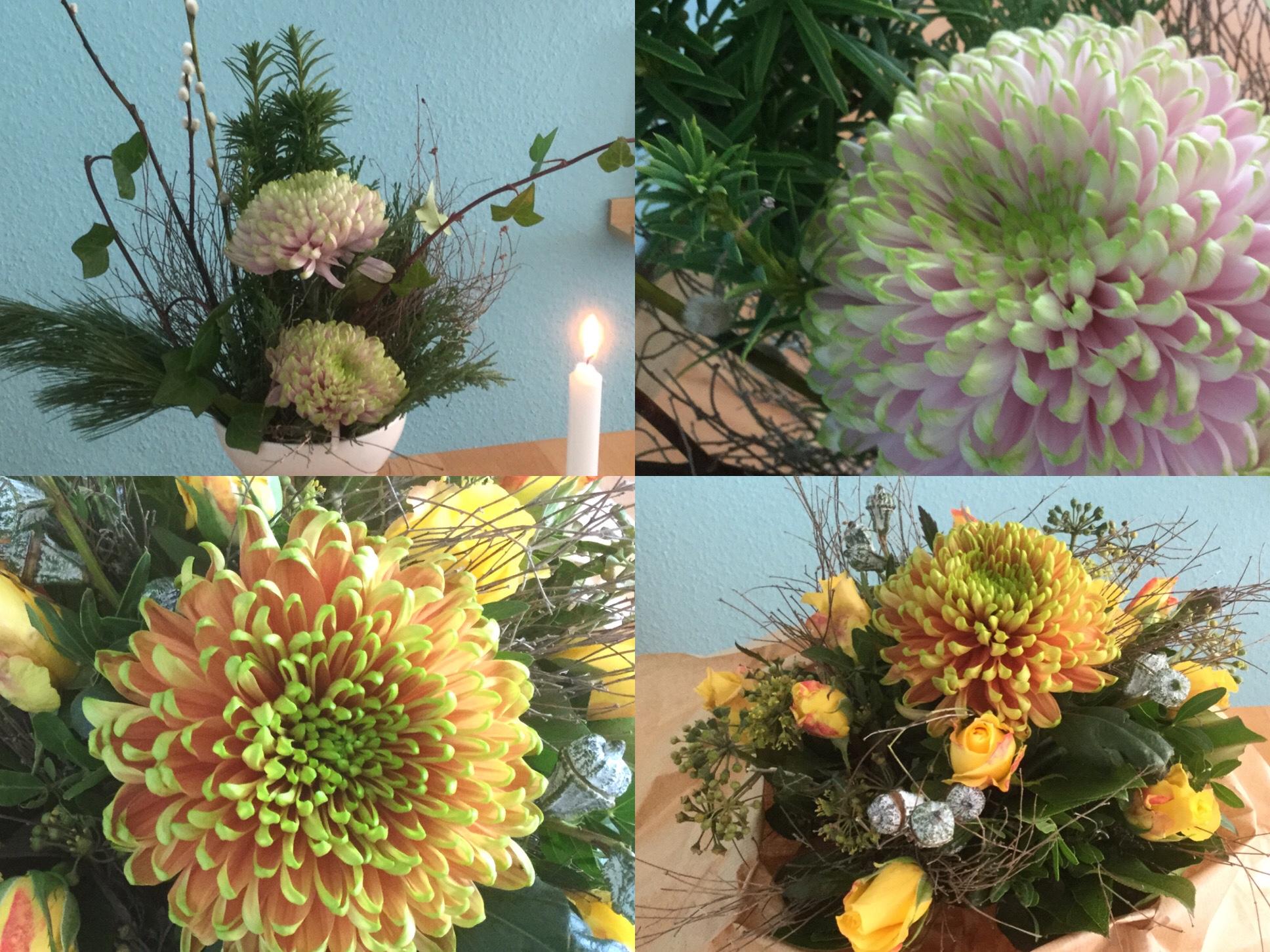 Friday-Flowerday – oder – Chrysanthemen zum Behalten und Verschenken
