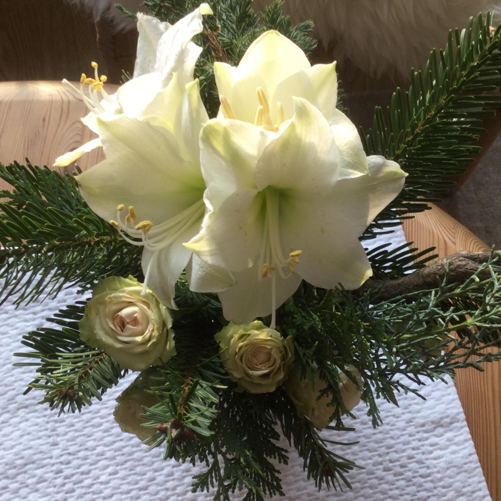 Weihnachtszeit bei Lilamalerie #6 – oder – Amaryllis, Rosen & Tannengrün
